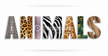 Image result for zebra print the word welcome